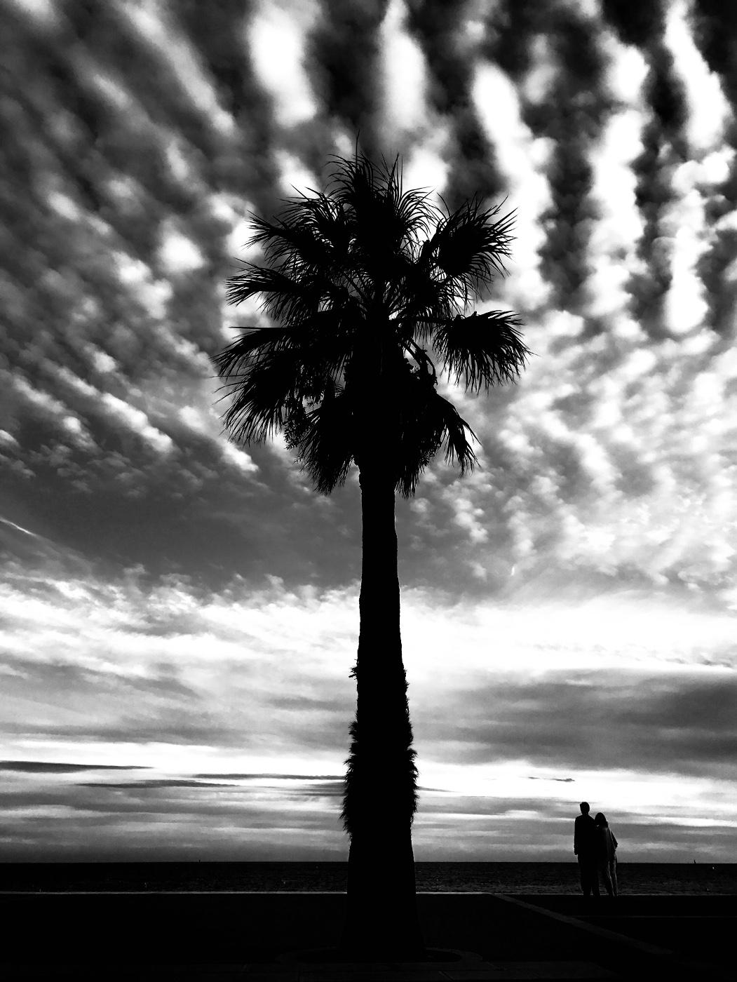 photo palmier noir blanc