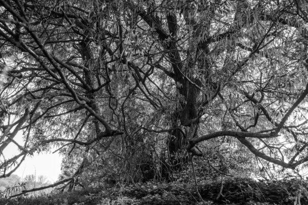 photographie forêt lille