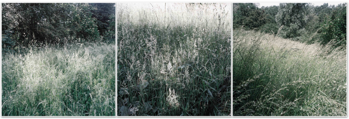 photo art herbes