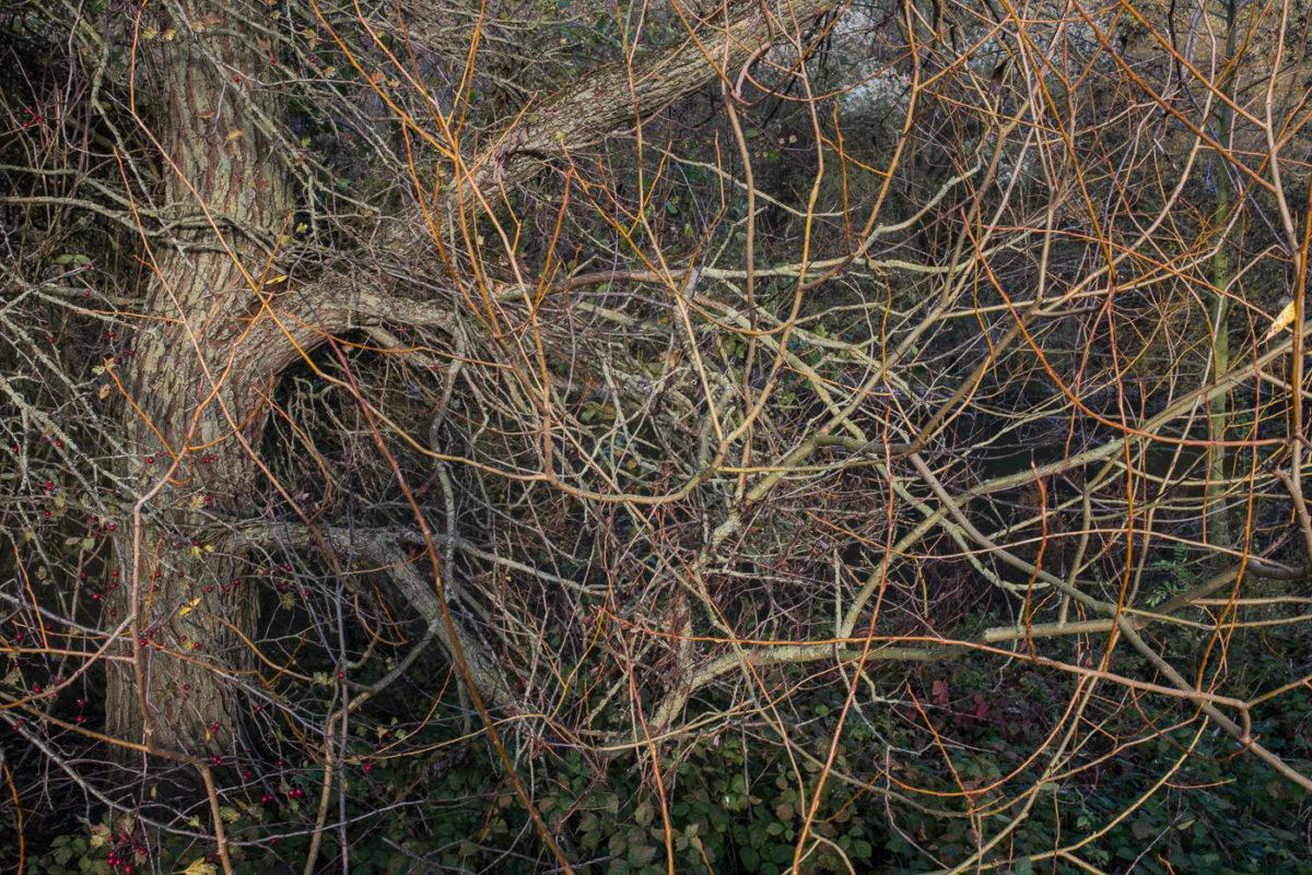 branches artistique