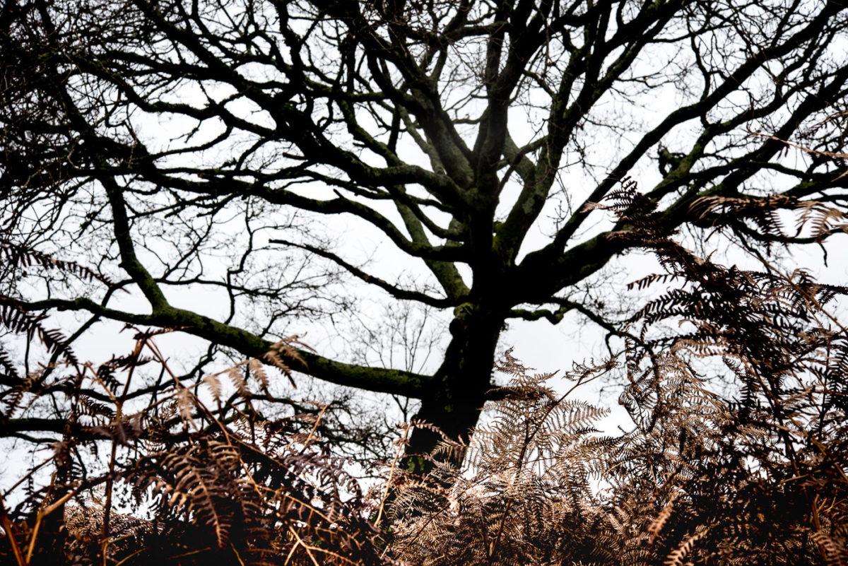 artiste arbre